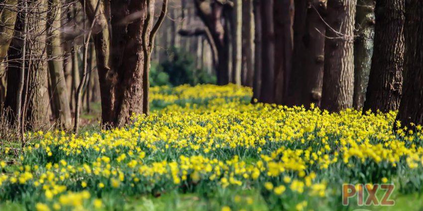 PIXZ Zeeland foto van de Week 'Lente in Zeeland'
