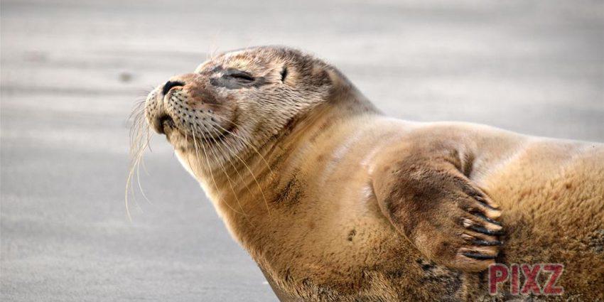 Zeehonden spotten Zeeland