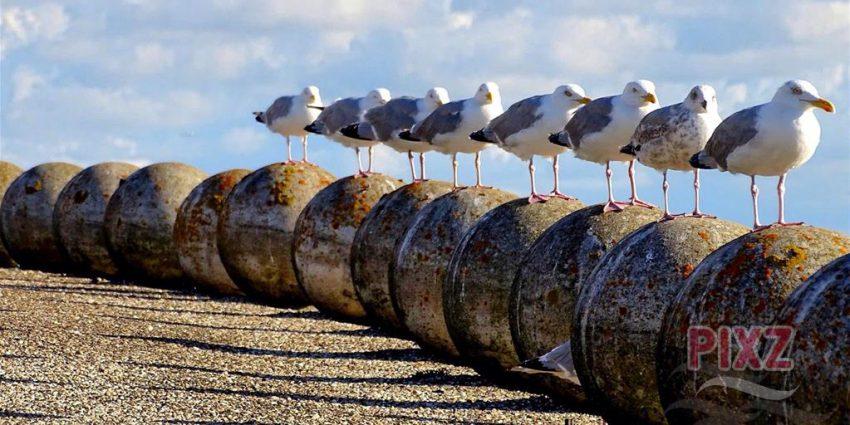 PIXZ Zeeland Foto van de Week 'heb jij ze op een rijtje'? | Vrouwenpolder