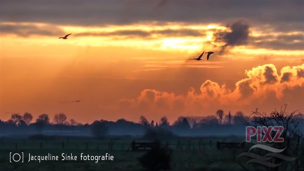 https://pixz.nl/foto/detail/558785-vogelvlucht-boven-yerseke-moer